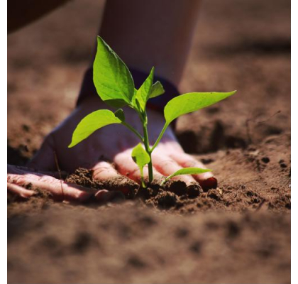 Simple Ways To Celebrate Earth Day 2021