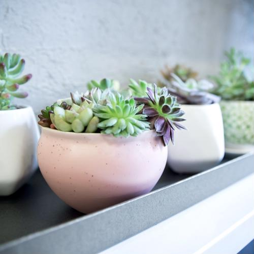 You don't need a green thumb for these plants